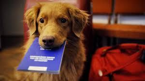 Pașaport câine și pisică: Ghidul tău aici